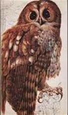 Het beste vogelboek - Zonder Schrijver