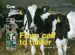 eBook from calf to heifer - Jan Hulsen (ISBN 9789087402488)