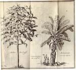 Histoire de la Jamaïque - Hans Sloane, J. Raulin