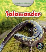 Levensloop van een salamander - Charlotte Guillain (ISBN 9789461757166)