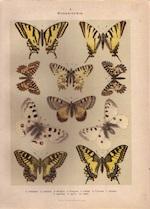 Die Gross-Schmetterlinge Europas