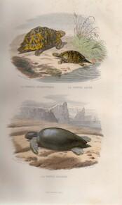 Histoire Naturelle de Lacépède - Cuvier, M.A.G. Desmarest