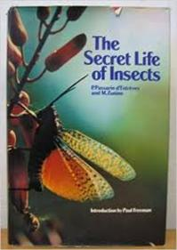 The Secret Life of Insects - P. Passerin D'Entrèves, M. Zunino (ISBN 9780856132605)